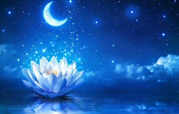 Картинка цветок, вода, сияние, лотос, flower, water, sparkle, bloom, water lily