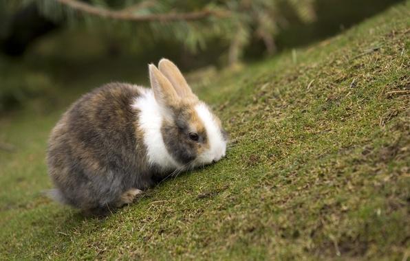 Картинка трава, кролик, резкость, расцветка