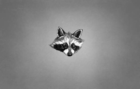 Картинка морда, животное, черно-белый, минимализм, енот, raccoon
