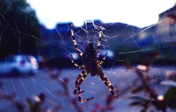 Картинка природа, город, фон, паутина, паук, насекомое