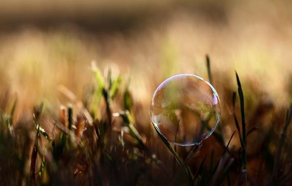 Картинка лето, трава, макро, свет, природа, фото, фон, обои, тень, растения, пузырь, wallpapers, мыльный