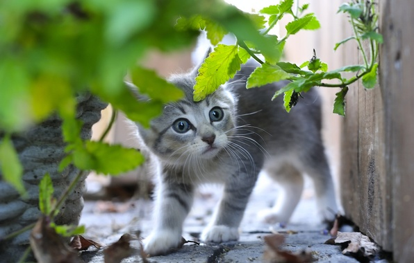 Картинка трава, серый, малыш, котёнок, испуганный
