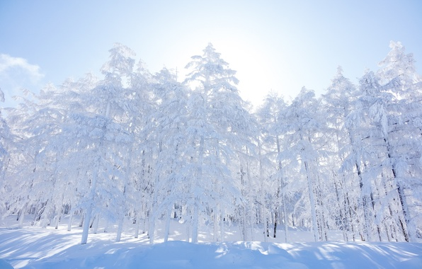 Картинка зима, лес, небо, снег, деревья, утро