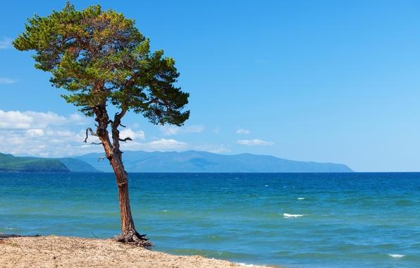 Картинка фото, Природа, Дерево, Озеро, Байкал, Россия, Пейзаж, Baikal