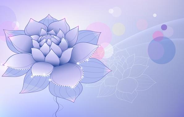 Картинка цветок, сиреневый, лотус