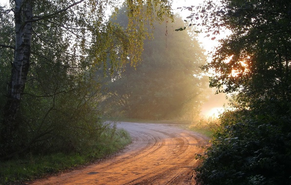 Картинка дорога, лес, свет, природа, утро