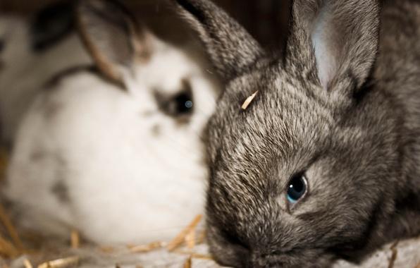 Фото обои крольчата, животные, кролики, малыши, обои