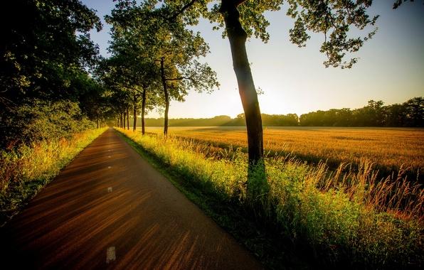 Картинка дорога, поле, лес, трава, деревья, закат, природа, вид, grass, прогулка, forest, road, trees, field, nature, …