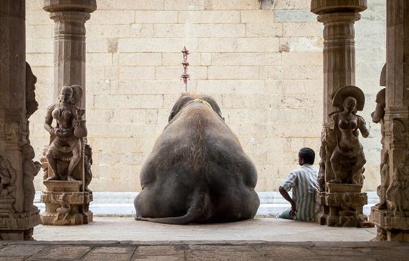 Картинка отдых, человек, слон, Индия