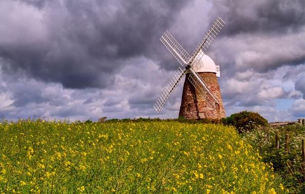 Картинка поле, небо, облака, цветы, тучи, природа, рапс, ветряная мельница