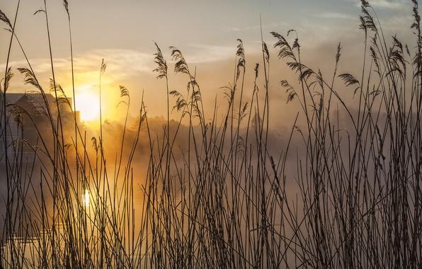 Картинка небо, трава, солнце, облака, макро, закат, река, растение, стебель
