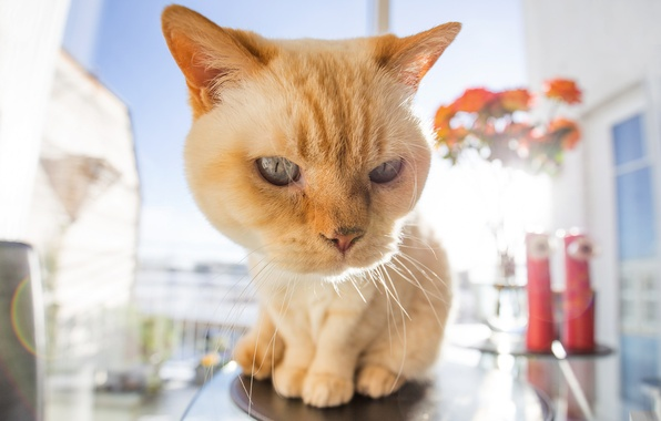 Фото обои кот, усы, фон, моська