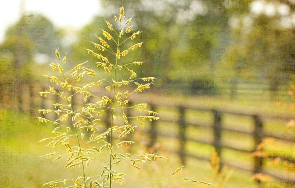 Картинка трава, макро, стиль, забор