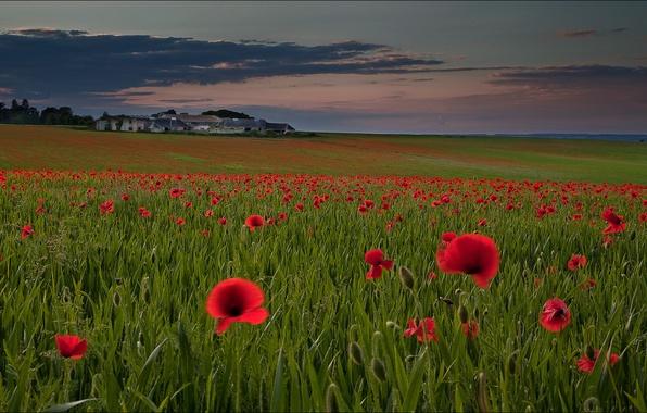 Картинка поле, небо, цветы, тучи, холмы, маки, дома, вечер, луг