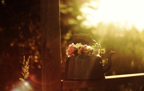 Картинка лето, солнце, лучи, цветы, блики, настроение, букет, утро, чайник, колоски, воздух, натюрморт
