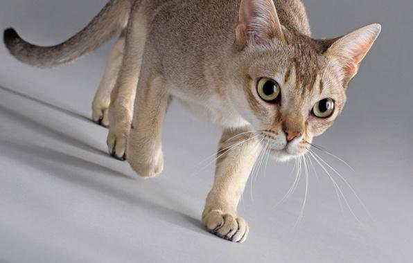 На рабочий стол раздел кошки скачать