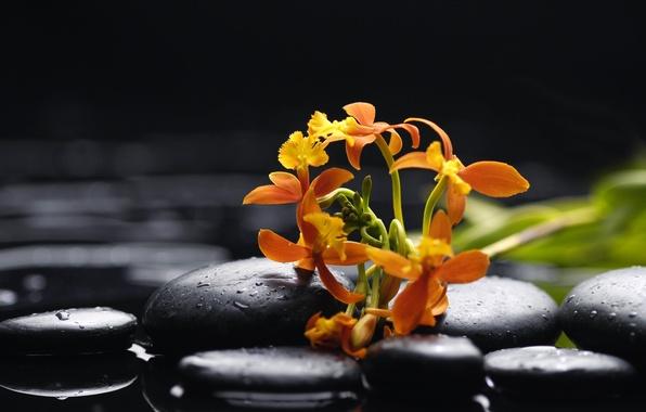 Картинка вода, капли, цветы, нежность, красота, оранжевая, лепестки, орхидеи, орхидея, water, flowers, beauty, orange, drops, Orchid, …