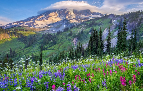 Картинка облака, деревья, цветы, горы, природа, холмы, поляна, США
