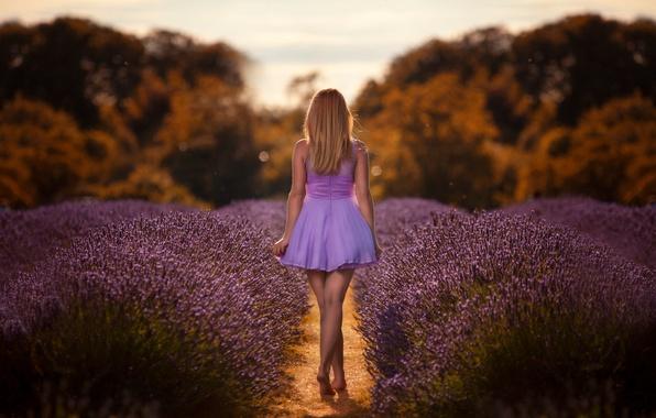 Картинка поле, девушка, платье, лаванда