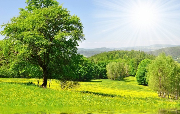 Картинка зелень, лес, трава, вода, солнце, деревья, цветы, Природа, луг