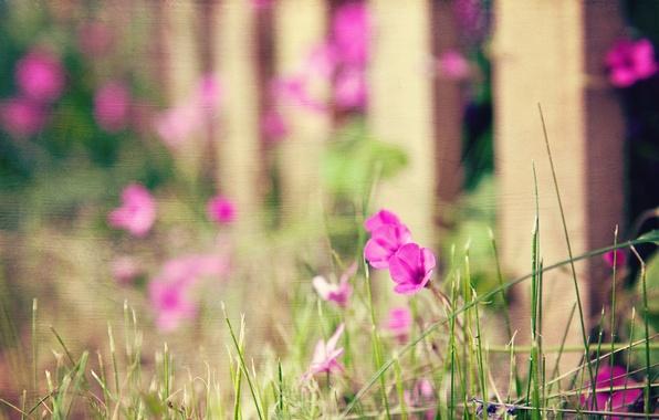 Картинка цветы, стиль, фон, забор