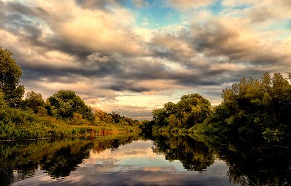 Картинка лес, лето, озеро, отражение, лебедь