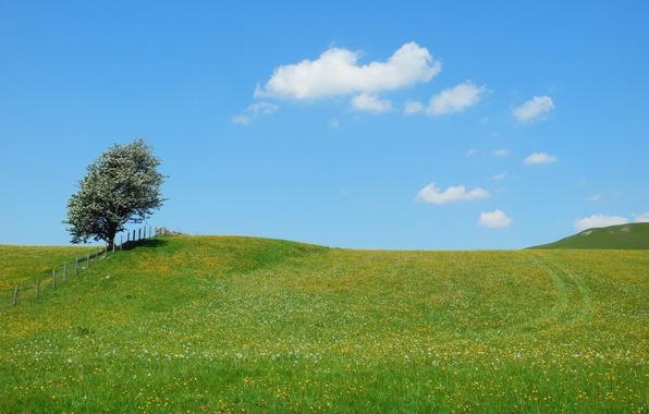 Картинка поле, лето, пейзаж, природа, дерево, забор