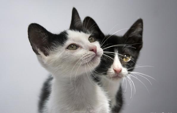Картинка котята, малыши, парочка