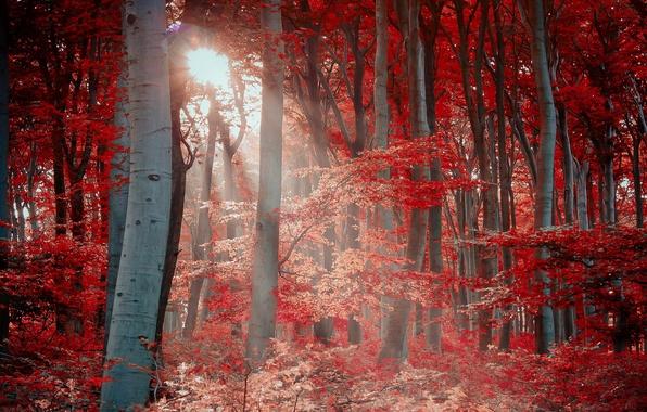 Фото обои свет, лес, природа