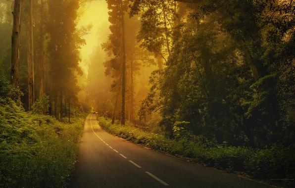 Картинка дорога, машина, лес, трава, деревья, туман, разметка