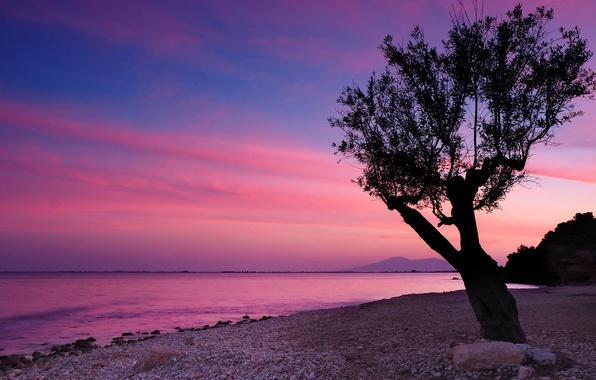 Картинка небо, облака, закат, горы, озеро, камни, дерево, берег
