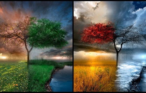 Картинка природа, место, дерево, времена года, природная красота