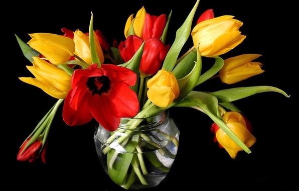 Картинка цветы, весна, желтые, тюльпаны, красные, ваза, черный фон, бутоны
