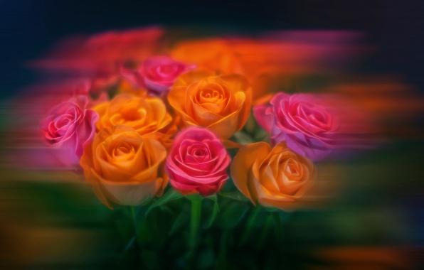 Картинка цветы, розы, обработка, букет, размытие