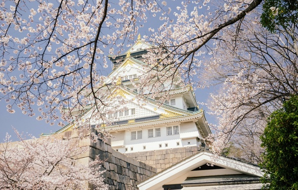 Картинка деревья, ветки, вишня, замок, весна, Япония, сакура, Japan, цветение, Osaka, Осака, Osaka Castle, Osaka Castle …