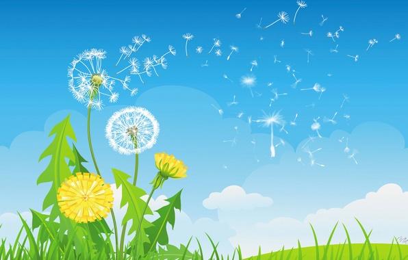 Картинка небо, трава, облака, цветы, одуванчик, коллаж, вектор, былинка