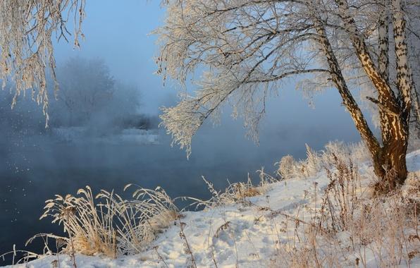 Картинка зима, снег, пейзаж, природа, туман, река, берёза