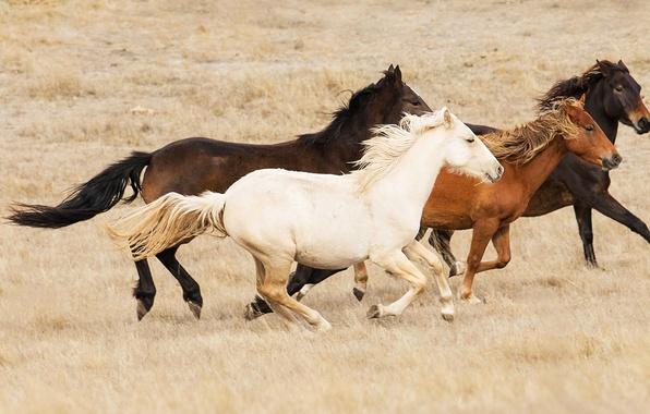 Картинка степь, лошади, Австралия, табун, буш