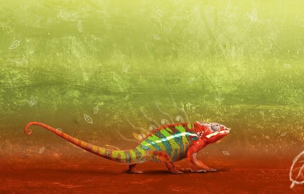 Картинка дизайн, хамелеон, градиент