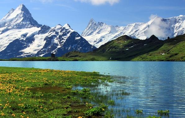 Картинка трава, снег, горы, река, скалы, Швейцария, Switzerland, цветы., Берн, Bern, Гринднльвальд, Grindelwalt