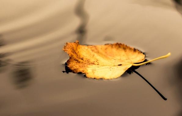 Картинка осень, вода, макро, желтый, природа, лист, тень
