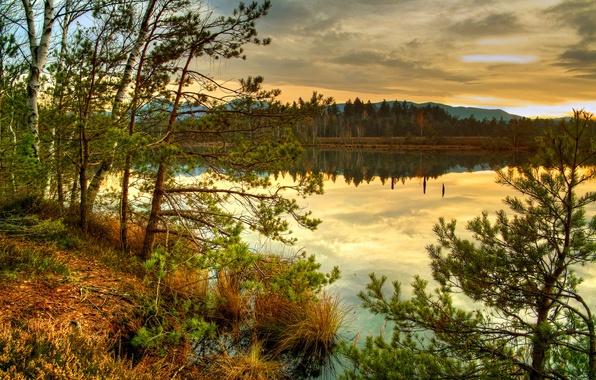 Картинка осень, лес, трава, облака, деревья, закат, природа, озеро, ель, хвоя, сухая, глядь