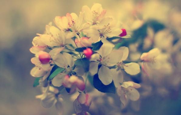 Картинка макро, цветы, природа, фото, фон, обои, растения, ветка, весна, бутоны, цветение