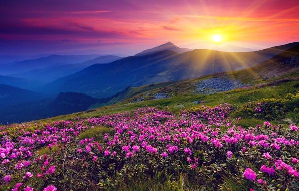 Фото обои цветы, солнце, рассвет, горы