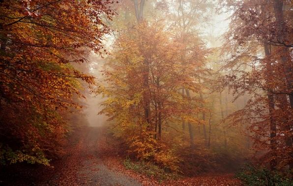 Фото обои утро, природа, туман, дорога, осень, лес