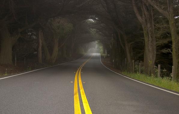 Картинка дорога, деревья, природа, туман, дымка