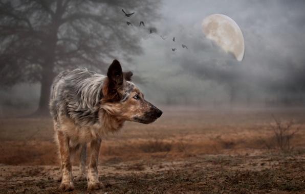 Картинка фон, луна, собака