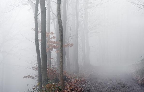 Картинка дорога, осень, деревья, туман