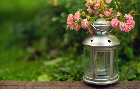 Картинка зелень, трава, цветы, свеча, размытость, фонарик, фонарь, розовые