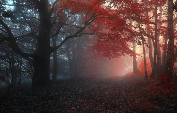 Картинка дорога, осень, лес, листья, деревья, туман